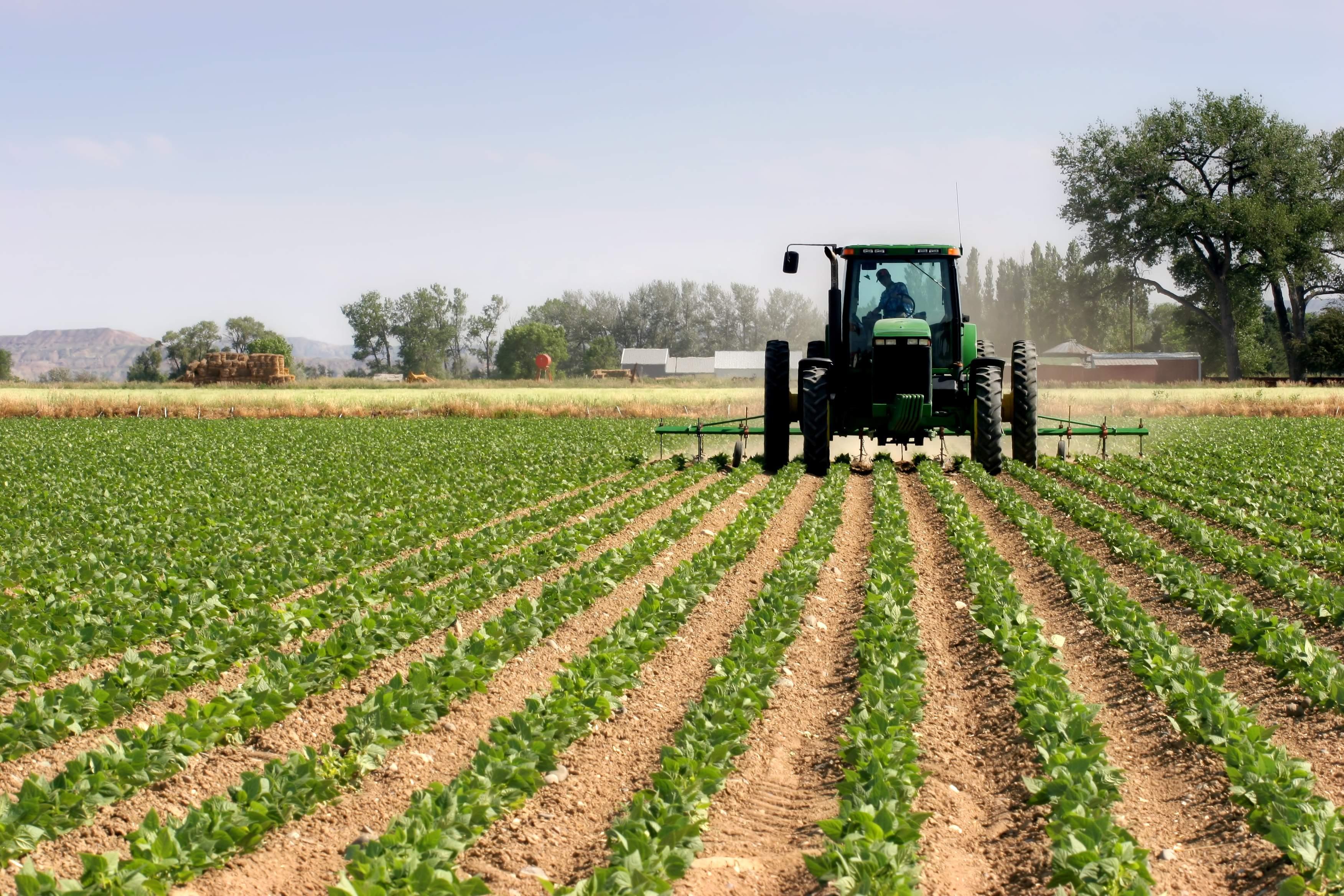 Selo SIM: Garantia de crescimento na agroindústria