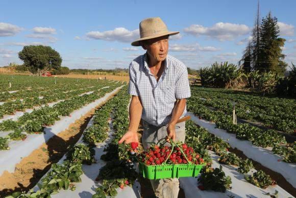 Governo divulga dados oficias da produção agropecuária no Brasil