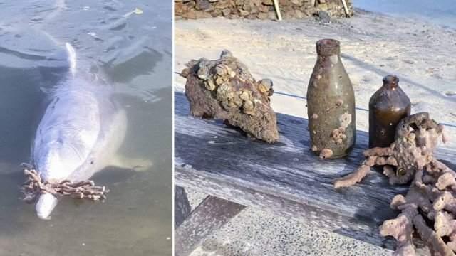 """Golfinhos sentem a falta de humanos durante a quarentena e deixam """"presentes"""" na areia"""
